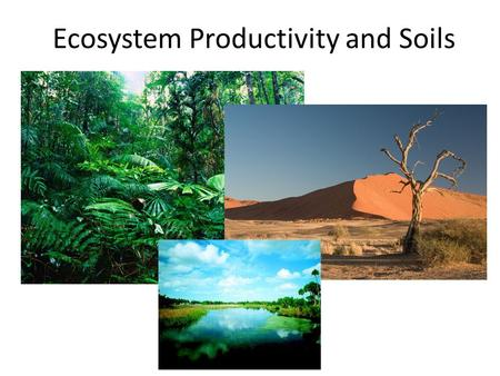 Ecosystem Productivity and Soils. Energy Pyramid.