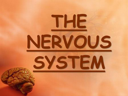 THE NERVOUS SYSTEM THE NERVOUS SYSTEM. THE NERVOUS SYSTEM The nervous system is the master controlling and communicating system of the body. The nervous.