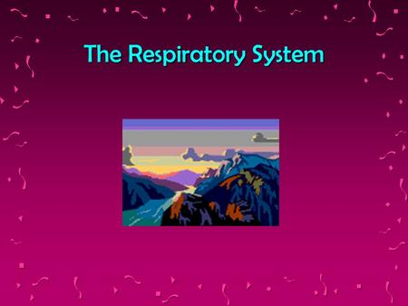 The Respiratory System Components The Nasal passages The tubes of respiration The Trachea The Bronchi and Bronchioles The Alveoli The Lungs.