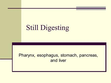 Still Digesting Pharynx, esophagus, stomach, pancreas, and liver.