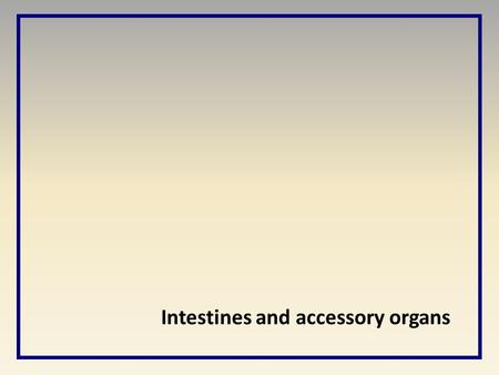 Intestines and accessory organs.  The small intestine (5.75m) is a long tube where the majority of food digestion and absorption takes place Small Intestine.