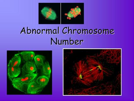 Abnormal Chromosome Number. A Change in Chromosome Number If the spindle fails at meiosis, this causes an incorrect number of chromosomes in the gametes.