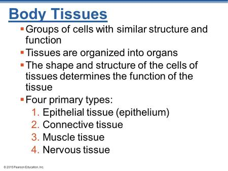 © 2015 Pearson Education, Inc. Body Tissues  Groups of cells with similar structure and function  Tissues are organized into organs  The shape and structure.