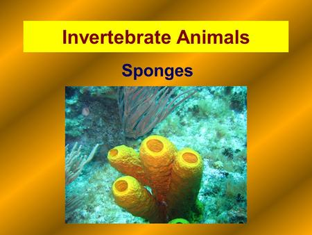 Invertebrate Animals Sponges.
