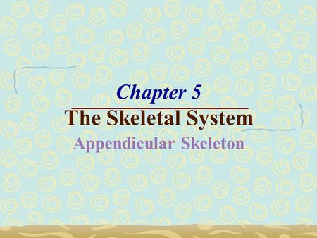 Chapter 5 The Skeletal System Appendicular Skeleton.