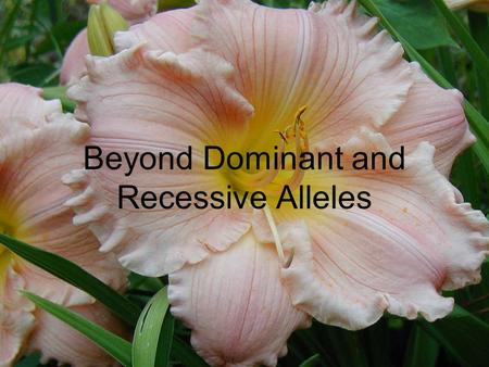 Beyond Dominant and Recessive Alleles. There are important exceptions to Mendel's discoveries Not all genes show simple patterns of dominant and recessive.