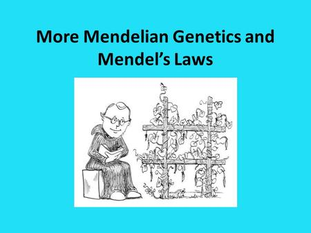 More Mendelian Genetics and Mendel's Laws. Vocabulary True-breeding: a plant that always produces offspring with identical traits when it self-pollinates.