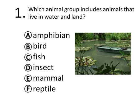 1. amphibian bird fish insect mammal reptile Which animal group includes animals that live in water and land?