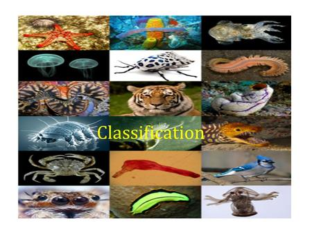 Classification. What is Classification? Biologists want to better understand organisms so they organize them. Classification = the grouping of objects.