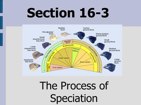 Section 16-3 The Process of Speciation. How does speciation occur? A genetic change in one individual can spread through the population as reproduction.