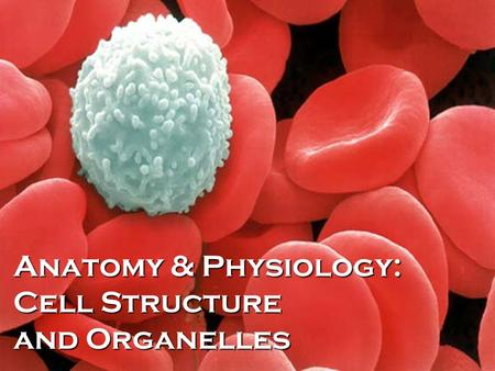 Anatomy & Physiology: Cell Structure and Organelles.