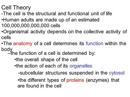 Cell Theory -The cell is the structural and functional unit of life Human adults are made up of an estimated 100,000,000,000,000 cells Organismal activity.