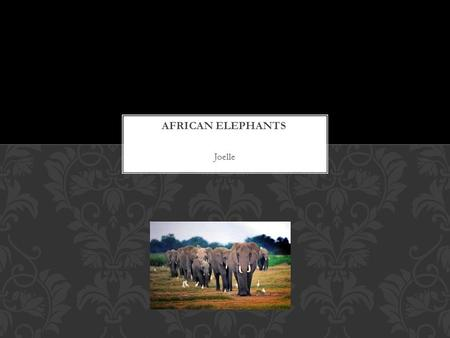 Joelle. Elephants are the largest land-dwelling mammals on earth. The scientific name for the elephant is Loxodonta. The Elephant male is bigger than.