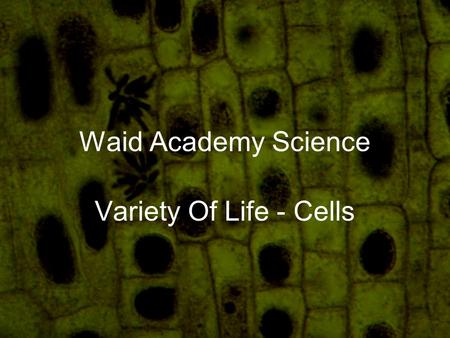 Waid Academy Science Variety Of Life - Cells. What name is given to the basic unit of all living things? 1.Cells 2.Atoms 3.Blocks 4.Organisms 10.