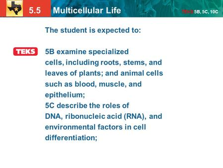 5.5 Multicellular Life TEKS 5B, 5C, 10C The student is expected to: 5B examine specialized cells, including roots, stems, and leaves of plants; and animal.