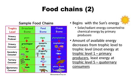 Food chains (2) Begins with the Sun's energy Solar/radiant energy converted to chemical energy by primary producers Amount of available energy decreases.