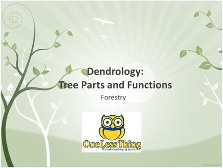 Dendrology: Tree Parts and Functions