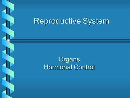 Reproductive System Organs Hormonal Control. Male Reproductive System Testis: sperm production Epididymis: sperm maturation Vas Deferens: sperm transport.