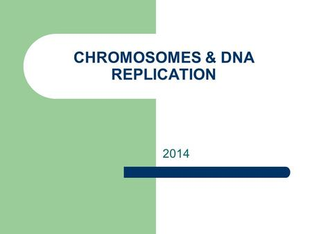 CHROMOSOMES & DNA REPLICATION 2014. DNA WHERE IS DNA FOUND IN THE CELL? IN PROKARYOTIC CELLS, DNA IS LOCATED IN THE CYTOPLASM. MOST PROKARYOTES HAVE.