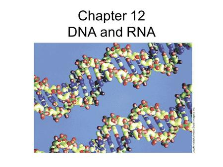 Chapter 12 DNA and RNA. There are four kinds of bases in DNA: adenine guanine cytosine thymine.
