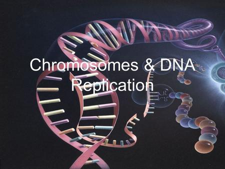 Chromosomes & DNA Replication. Memory Refresher!! What is DNA? –Deoxyribonucleic acid/molecule to store and transmit genetic information What THREE things.