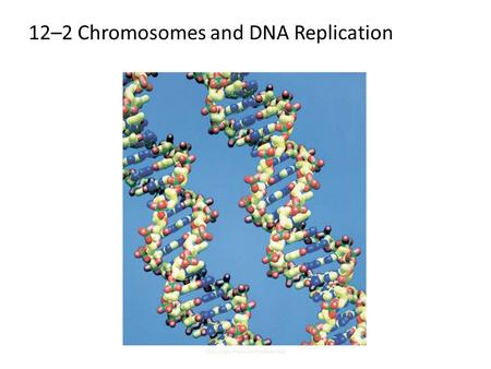 Copyright Pearson Prentice Hall 12-2 Chromosomes and DNA Replication 12–2 Chromosomes and DNA Replication.