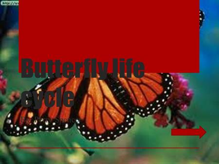 Butterfly life cycle By. Perry Spencer. Stages of life Stage one egg Stage two Larva Stage three Pupa Stage four Adult Review.