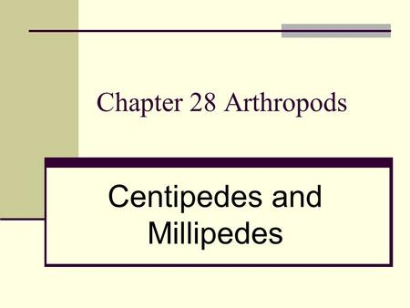 Chapter 28 Arthropods Centipedes and Millipedes. 14. Subphylum Uniramia –Centipedes, millipedes and insects. A. Class Chilopoda 1. Centipedes a). One.