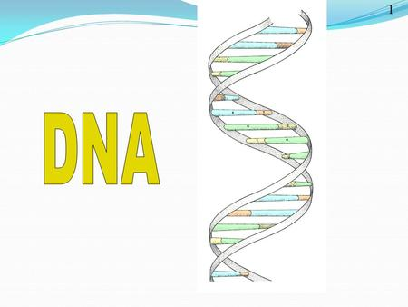 1. Nucleic Acids TWO MAIN TYPES DNA- Deoxyribonucleic Acid RNA- Ribonucleic Acid.