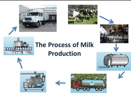 The Process of Milk Production