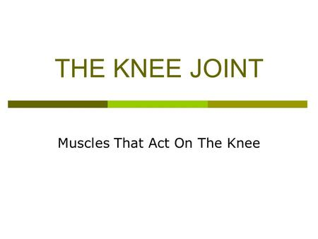 THE KNEE JOINT Muscles That Act On The Knee. Muscles of the Knee Joint  Hamstrings All - flexion  Quadriceps All - extension  Unclassified Sartorius.