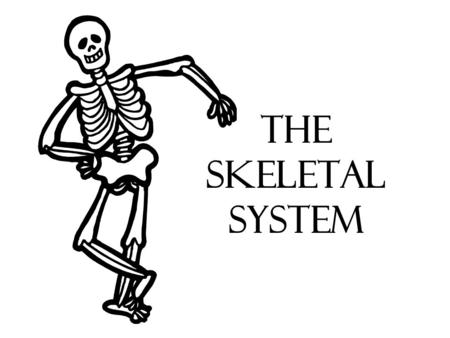 The Skeletal System. Human Skeleton Purpose of bones: Determines _________ of your body ___________ internal organs ___________ attachment Produces ________.