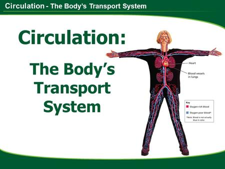 Circulation - The Body's Transport System Circulation: The Body's Transport System.