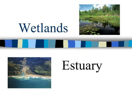 Wetlands Estuary. Wetlands Wetlands are areas of land that are saturated with water most of the year.