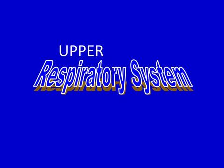 UPPER. Functions of the Respiratory System 1. Gas exchanges between the blood and external environment – Occurs specifically in the alveoli of the lungs.