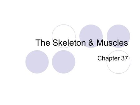 The Skeleton & Muscles Chapter 37. The human skeleton Divided in to 2 regions 1.AXIAL SKELETON---skull, spine, ribs & sternum 2.APPENDEDICULAR SKELETON----