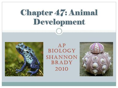 AP BIOLOGY SHANNON BRADY 2010 Chapter 47: Animal Development.