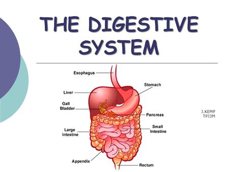 THE DIGESTIVE SYSTEM J.KEMP TPJ3M. THE DIGESTIVE SYSTEM The digestive system breaks down food: 1. physically 2. chemically so it can be absorbed for use.