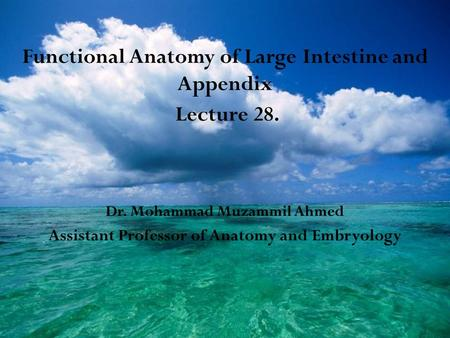 Functional Anatomy of Large Intestine and Appendix Lecture 28. Dr. Mohammad Muzammil Ahmed Assistant Professor of Anatomy and Embryology.