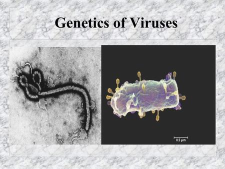 "Genetics of Viruses. Viral Structure n Virus: – ""poison"" (Latin) – infectious particles consisting of a nucleic acid in a protein coat n Capsid= viral."
