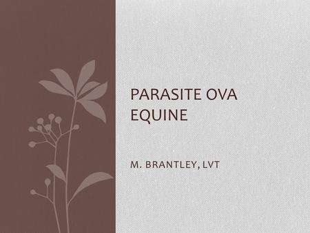 M. BRANTLEY, LVT PARASITE OVA EQUINE. Strongylus vulgarius/edentatus/equinus Large Strongyles-Bloodworms or redworms Most dangerous because parasite causes.