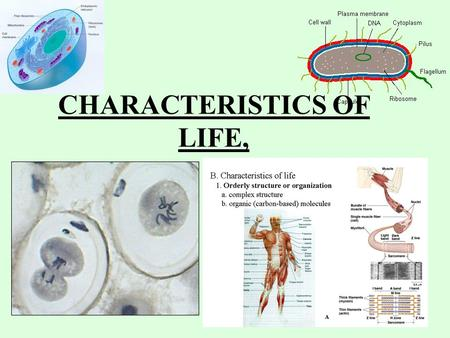 CHARACTERISTICS OF LIFE,. CHARACTERISTICS OF LIFE Organism – anything that has all of the characteristics of life. Living things are made of one or more.