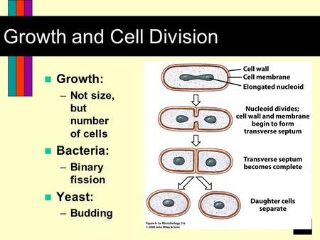1 Growth and Cell Division Growth: –Not size, but number of cells Bacteria: –Binary fission Yeast: –Budding.