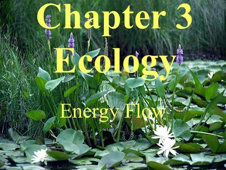 Chapter 3 Ecology Energy Flow. Ecology is the study of the way living things interact with each other and their physical environment.
