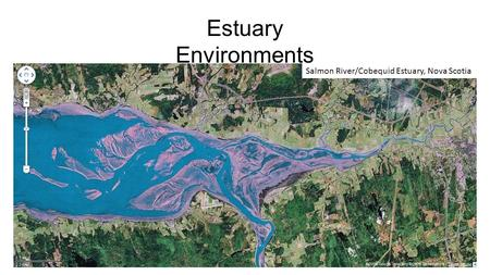 Estuary Environments Salmon River/Cobequid Estuary, Nova Scotia.