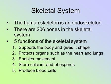 Skeletal System The human skeleton is an endoskeleton There are 206 bones in the skeletal system 5 functions of the skeletal system 1.Supports the body.