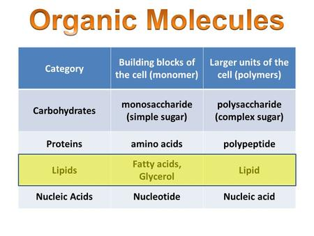 Category Building blocks of the cell (monomer) Larger units of the cell (polymers) Carbohydrates monosaccharide (simple sugar) polysaccharide (complex.