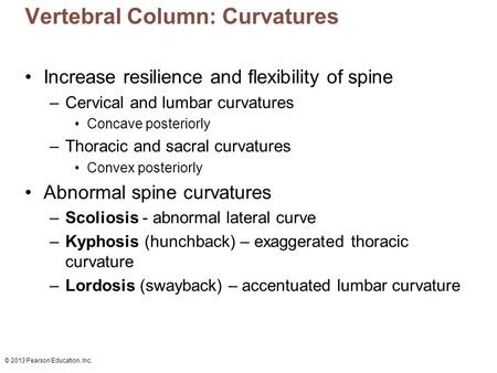 © 2013 Pearson Education, Inc. Vertebral Column: Curvatures Increase resilience and flexibility of spine –Cervical and lumbar curvatures Concave posteriorly.