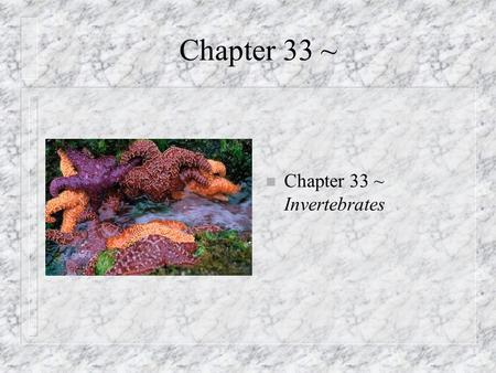 Chapter 33 ~ n Chapter 33 ~ Invertebrates Parazoa n Invertebrates: animals without backbones n Closest lineage to protists n Loose federation of cells.