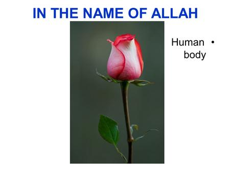 IN THE NAME OF ALLAH Human body. Introduction to the Human Body.